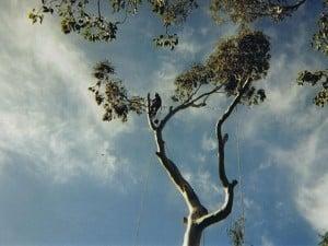 tree7-001-300x225